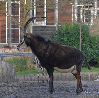 nikonphotography nikoneurope animals outdoor nikond5600📷 nikon