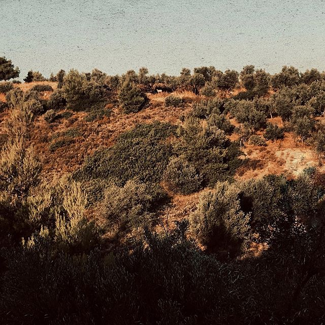 ifindyourlackofimaginationdisturbing lightedlight landscaperid nature_captures autumnvibes🍁 sheepsheep phonecaption