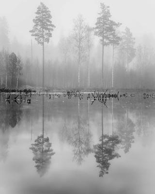 bästaträdbilden2017 borås boråsstad dimma kransmossen reflektionerivattnet sverige sweden träd trees viskogen