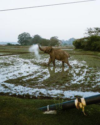 fujifilmbelgium natgeophotography natgeowildlife natgeowild natgeoyourshot natgeotravel exploresrilanka Srilanka