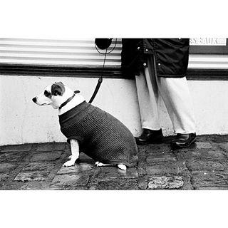 normandie filmisnotdead nownessstreetshots darkroom theprintswap france streetphotography jürgenschadeberg personalproject lines eingetaucht kodaktxmax400 dog ishootfilm canoneos300