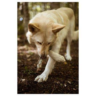 hiking nature landscapephotography hike mountain dog outdoorsman outdoor hikingwithdog landscapescenery throwback naturephotography
