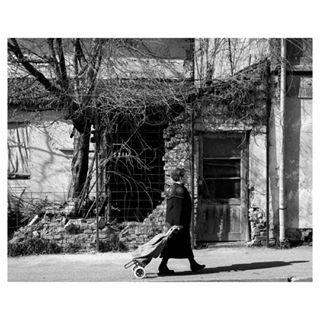 Josip Mišković photo 643597
