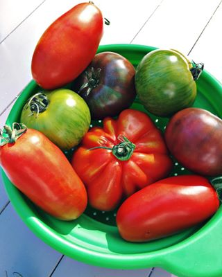 tomatoes veganfood greens summer17 iphoneonly red photographislifee simplepleasures summer different summervibes photographerslife tomato hipstamatic vegan