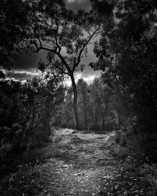 visuelearth monsantoportugal fineartphotography monochromatic picoftheday bnwmood life love blacknwhitephotography blackandwhitephoto black photooftheday monochrome art bnwphotography blackandwhitephotography bw blackandwhite bnw mospho landscapephotography dark way path forest trees series silence