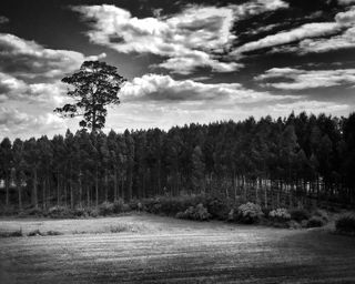 visuelearth portugal fineartphotography monochromatic picoftheday bnwmood life love blacknwhitephotography blackandwhitephoto black photooftheday monochrome art bnwphotography blackandwhitephotography bw blackandwhite bnw mospho landscapephotography dark way path forest trees series silence