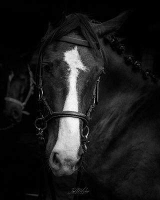 bnw blackandwhite kwpn horseriding horseblogger seelenpony horsemodel reitsport pferdeliebe paard cheval pferd horse animal pferdefotografie pferde horsegram cutehorse horseshows horsephotographer horseworld welovehorses instahorse horselove horsepower horseportrait horsesofinstagram horsephoto horses