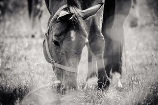 picturetokeep_bnw pictureoftheday bwphotography horseriding horseblogger seelenpony horsemodel reitsport pferdeliebe paard cheval pferd horse animal pferdefotografie pferde horsegram cutehorse horseshows horsephotographer horseworld welovehorses instahorse horselove horsepower horseportrait horsesofinstagram horsephoto horses