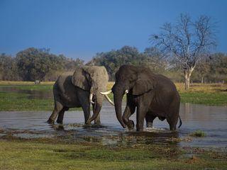 safariphotography agameoftones africa perfection perfecttiming capture elephants elephant wildlife wildlifephotography animals photooftheday picoftheday naturelover photography nature naturephotography