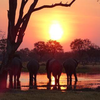 photographer pictureoftheday african botswana natgeowild natgeo naturephotography nature wildlifephotography wild wildlife africa picoftheday riverside agameoftones sunset elephant