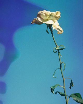 flowerphotography flower analogphotography filmphotography berlin karinkameraberlin