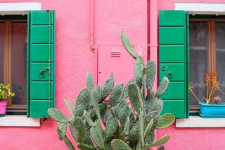 Francesca Verbena photo 1142069