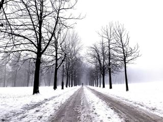 maygodblessyou beready onlyway jesuschrist path weather babyitscoldoutside 2020 newyear inlovewithphotography dalmatinoband dalmatino photographyismypassion photooftheday nature slovenianature slovenia ljubljana photo photography tree snowtime snowwalk snow winter