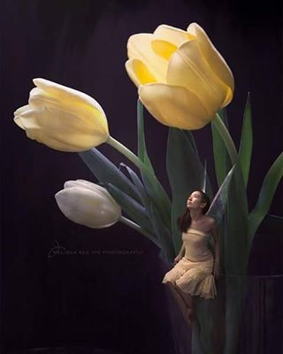 miniature photoshop composite fantastical photomanipulation littlepeople dream fantasyart photomanipulationart flowers fantasy thumbelina fairy winnipegphotographer tulips surreal mktphotography compositephotography melissakeetin