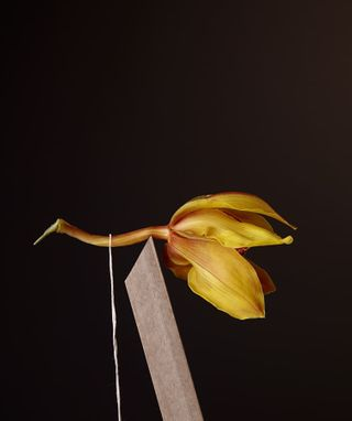 balance cymbidium kerstinlakeberg orchid portfolio still stilllifephotography yellow
