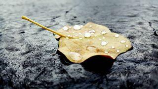 blacktop rain leaf
