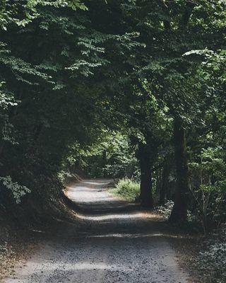 beneluxmagazine naturehippys_ nature_lensart wanderlust_hp hiyapapayaphotoaday photography_of_a_naturelover belgianshooters belgianclicks shade landscapephotography belgium walking vacation nature hiking travel travelphotography trees