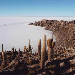 wanderlust wonderfulplaces travelphotography southamerica saltflats island cactus salardeuyuni bolivia travel throwbackthursday memories