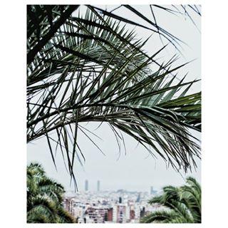 whereissummer barcelona palmtrees