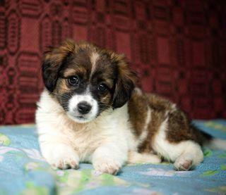 puppylove puppy yourshotphotographer cutedog cute look eyes beauty pose dogofinstagram dog