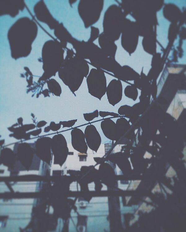 lalithamarty photo: 0