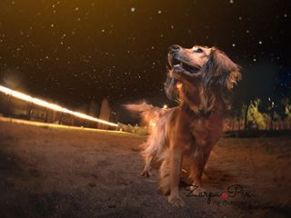 rescuedog nightout night instaperros lanzarotephotographer parkday buddies happydog spain dogs barcelona dogphotography lanzarote chien perros instadogs dogparkfun dogsplay petphotography dogplay gossos dogpark europe getolympus instagossos