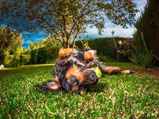 petphotography europe chien perros lanzarotephotographer instaperros dogfun gardenplay dogphotography dogsintagram instadogs dogsofmalaga marbella spain rescuedog buddies night dogplay happydog getolympus