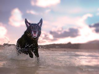 photooftheday canarias playa lanzarote dogsintagram instaperros happydog petphotography lanzarotephotography buddies instadogs rescuesdog spain europe dogfeatures beachdays getolympus lanzarotephotographer perros chien dogphotography