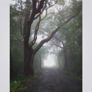 early green jamboti chorla morning fog