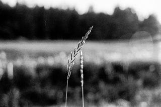 hennijarvinen_ photo: 2