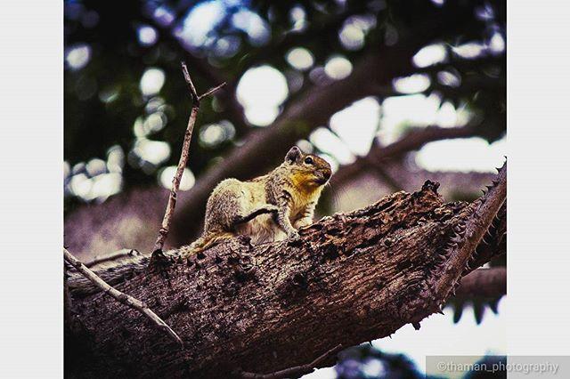 thaman_traveldiaries photo: 0