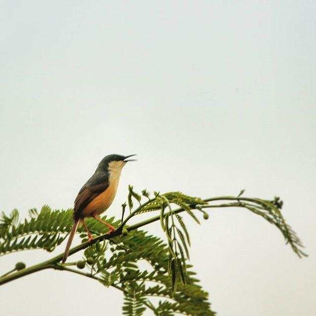 parvandh_krishnan photo: 1