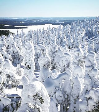 winter tykkypuut snow olennot lumi loma lapland kuusamo kotiseutu jumala finland