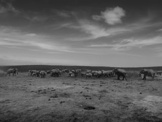 afriquedusud amazingplace animals bw bwlover bwstyleoftheday elephant explore groupsafaris instravel landscape landscapephotography leica monochromatic monotone nationalgeographic photooftheday safari southafrica tourism tourisme travelers travelgram traveling travels travelworld voyage welivetoexplore wildernessculture worldtraveler