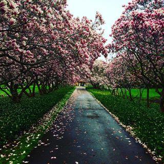 photographer toronto nature beautiful niagarafalls niagara sakura canada niagaraparks rutulnaikphotography