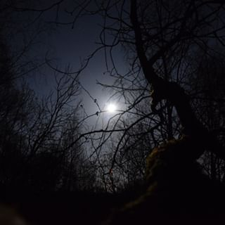 and d5300 full fullmoon moon nikon tree trees unfiltered wood