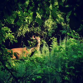 click to lovetoclick thankful deer thoughsclicks clicks photography natgeotravel always nature proud animalovers innocent wildlife jungle in natgeo animals naturelovers