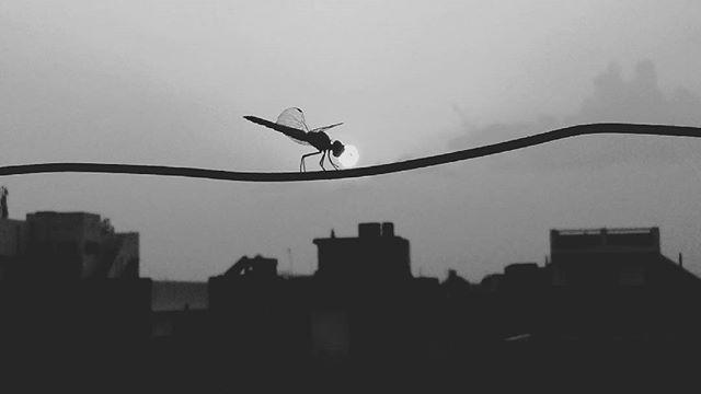gauravansh photo: 1
