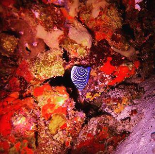 thephoodtourist coloursofnature diving