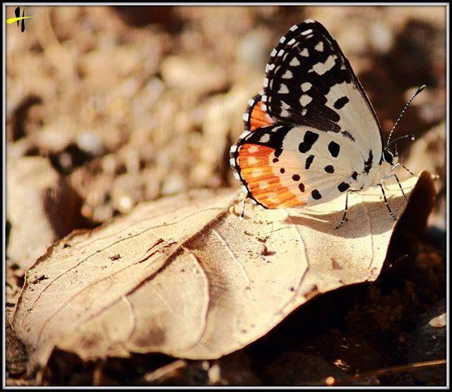 harshad0604 photo: 0