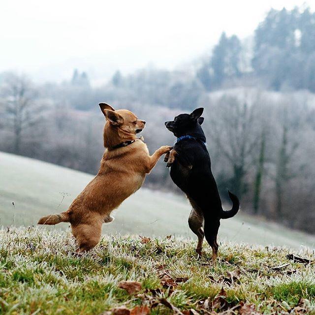 4patas beautiful cute dogs_of_instagram instadogs love lovedogs photooftheday picoftheday puppygram