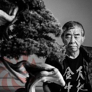 art blackandwhite bonsai instamood japan photography photooftheday yolo