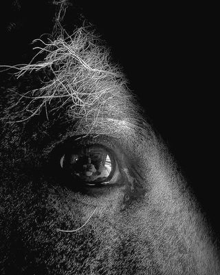 Smartphone refugededarwin eye animalphotography animales black noiretblanc cheval