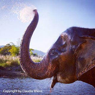 sustainable sustainabletourism elephantnaturepark elephants elephantsofasia asia tierenhelfen elefanten sostenible ecotourism everydaysustainable thailand tierliebe nachhaltig elefantastic animalsanctuary asien animallovers elefantos rescueanimals helpinganimals