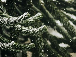 fotografia london pine photo snowday snow londontown tree visitlondon photography snowfall cold pinecones treescape londonlife snowing trees snowy branches thisislondon naturelovers photooftheday photographer londoncity winter canonphotography canon nature naturephotography snowflakes