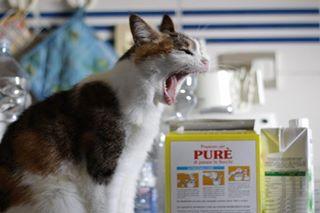 amore loveforanimals veganblog vegan gatti profondoviaggio love chats gatos iloveanimals canonspaitalia cats veganfood iloveplanetearth☀️🌍❤️
