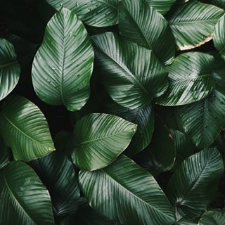 photograpy leaves nature foliage