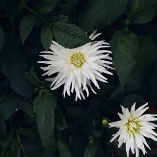 flora naturephotography flowers