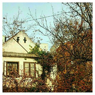 old trees windows autumn ig_today nature leaves loves_indouble autumnleaves daily_photoz window house loves_windows naturelovers portasejanelas nature_perfection tree ruined morning natureporn