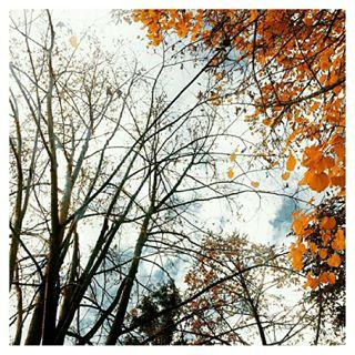 hugs_for_trees yellow daily_photoz nature_perfection vivo_natura ig_today naturelovers natureporn autumnleaves red trees nature orange autumn igmoodz leaves